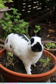 cute animals - Bunday: Potted Bunny Plant