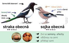Elementary Science, Bird Watching, Biology, Activities For Kids, Birds, Teaching, Education, School, Nature