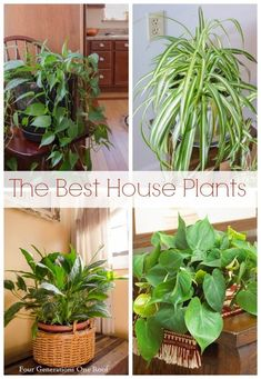 The best house plant