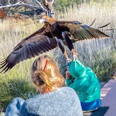 Um menino com idade estimada entre seis e oito anos levou um baita susto em uma reserva ecológica do norte da Austrália: uma águia audax, maior ave de rapina encontrada no país, tentou carregá-lo.Esses animais podem atingir 2,3 metros de envergadura.Uma sequência de fotos mostra o momento em