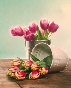 Bouquets of fresh cut tulips in metal cans. Fine Art Still Life Photography Print for Home Decor Wall Art. Fresh cut tulips in white metal can. An assortment of pink and variegated fresh cut tulips.. Still life of fresh tulip flowers. ~~ SELECT DESIRED SIZE USING THE OPTIONS BUTTON ABOVE ADD TO CART. Available in:5x7, 8x10, 11x14, 12x18, 16x24, 20x30, 24x36 prints.