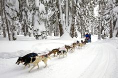Although this is in Oregonian, I want to go on a sled-dog tour in Alaska