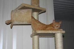 Hahahahaha! Whaaaat!? Looks comfy.. i suppose