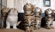 Karrewiet: Samenwonen met 1100 katten | Ketnet