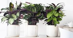 The Best Kind of Plant to Grow in Every Type of Apartment #purewow