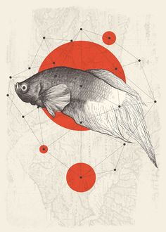 """Saatchi Art is pleased to offer the drawing, """"four points,"""" by Kaan Bağcı. Original Drawing: Digital on N/A. Gravure Illustration, Graphic Illustration, Graphic Art, Creative Illustration, Fish Art, Grafik Design, Illustrations Posters, Amazing Art, Design Art"""