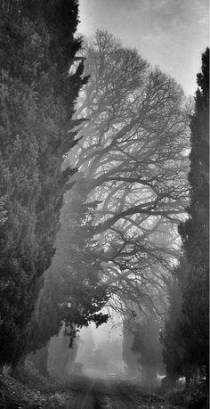 """Twitter / rikks69: """"Strada e nebbia"""" ValTrebbia"""
