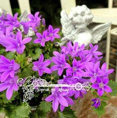 toprak ve ahşap: melekler korusun... Decoupage, Plants, Plant, Planets