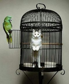 Cat in cage, bird out of cage