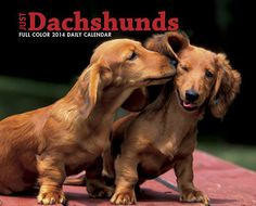 Dachshunds 2014