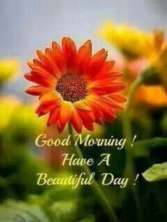 Are you searching for ideas for good morning handsome?Check out the post right here for cool good morning handsome ideas. These unique pictures will brighten your day. Good Morning Love Messages, Latest Good Morning Images, Good Morning For Him, Good Morning Thursday, Good Morning Handsome, Good Morning Funny, Morning Morning, Good Morning Flowers, Good Morning Photos