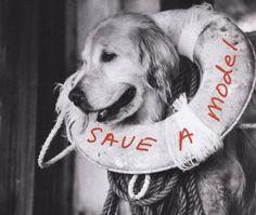 Model/s: Labrador  Photographer: Bruce Weber  Publication/Date: Unknown