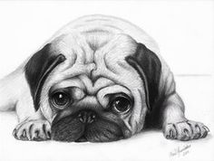 Puppy face - Pug by ArtOfNightSky