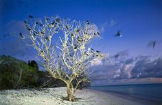 Arbol en una isla inhabitada de Kiribati, foto de George Steinmetz