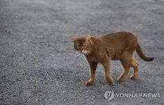 Panther, Cats, Animals, Gatos, Animales, Animaux, Panthers, Animal, Cat