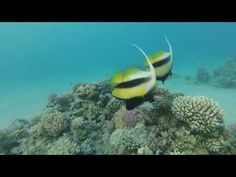 fort arabesque makadi bay hurgada egypt okt 2016 - YouTube