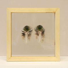 2 veren van een blauwe pauw ingelijst in een houten lijst van 25 x 25 cm.