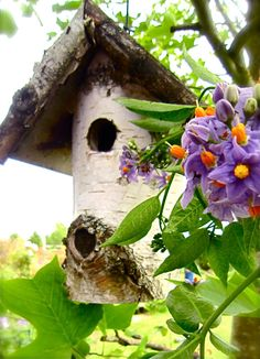 Rustic Bird House...MY DAD MADE ME MANY OF THESE.....I CHERISH EVERY SINGLE ONE!