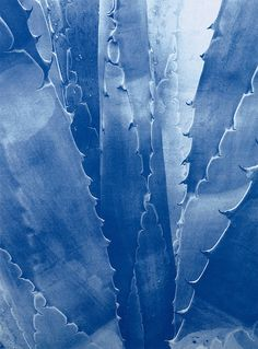 Photo Diary: Blues by Tim Barber Urban Photography, Abstract Photography, Amazing Photography, Tim Barber, Plants Are Friends, Cyanotype, Blue Aesthetic, Photo Diary, Blue Crystals