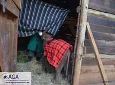 Fütterung vorm Schlafengehen. Alle drei Stunden bekommen die kleinen Elefanten ihre Milch. Aga, January, Elephants, Milk