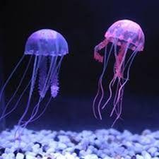 Výsledek obrázku pro medúza foto