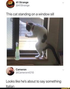 Picture memes 5 comments — iFunny This cat standing on a window sill Looks like he's about to say something Italian – popular memes on the site Funny Animal Jokes, Funny Animal Pictures, Animal Memes, Funny Photos, Funny Images, Funny Cats, Funny Animals, Humorous Pictures, Animal Humor