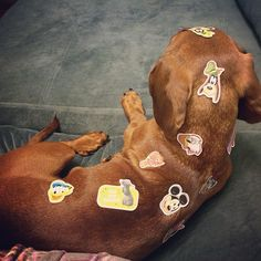 A weenie dog who doesn't mind being a canvas for a young artist.