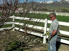 Pruning Apple Trees in 5 Minutes or Less by Jim Belliston. Mark Ashcroft resident garden advisor in our northern Utah neighborhood explains what to look for and how to prune an apple tree.  His orchard is a testament to the fact that proper pruning helps produce lots of beautiful apples.  However, it will probably take a little longer than 5 minutes per tree.