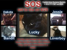 URGENT- WILL DIE ON 6/26A Columbus Ohio woman and her disabled daughter were removed from their house last week and their 5 cats were seized. ARE YOU ABLE TO LOCATE A RESCUE GROUP TO GET THE CATS OUT OF THE SHELTER TO SOME PLACE SAFE until this can be resolved. The family would like to be able keep them but if they ultimately are unable to, adoption is preferable to euthanasia! The person at the shelter who knows the situation is Kerry Manion (614-777-7387 ext #229 - leave name and phone…