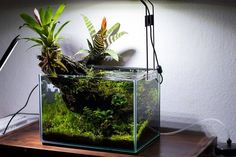 Favourites: 'Devil's Throat' by DGR Ukaps member, DGR, has created this journal of his truly original scape. Learn about this scape here. Biotope Aquarium, Aquarium Garden, Garden Terrarium, Planted Aquarium, Aquarium Fish, Nature Aquarium, Aquarium Ideas, Water Plants Indoor, Nano Reef Tank
