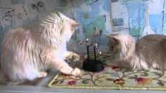 Cat pendulum stops.Кот останавливает  маятник.