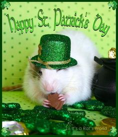 Happy Saint Patrick's Day.....Ratties style !