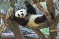 Xiao Liwu on the hammock | by Rita Petita