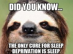 The sloth is not amused. Chill Out Meme, How To Stay Awake, Sleep Deprivation, Calm Down, Animal Quotes, Tumblr Posts, Tumblr Funny, Best Memes