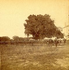 """First Black Regiment, South Carolina near Beaufort S. The only view of this regiment ever made."""" Published by John C. Civil War Books, American Civil War, American Soldiers, Unknown Soldier, Civil War Dress, Union Army, Civil War Photos, African American History, Black History"""