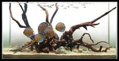 Hardscaping-13-driftwood-strata