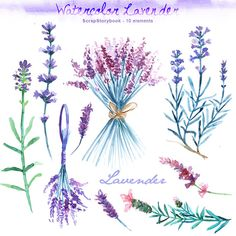 Watercolor Lavender Set - digital printable clipart  - 300 dpi PNG, transparent background
