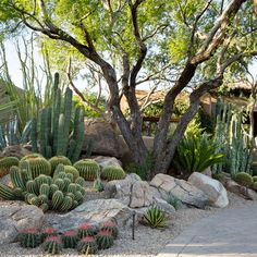 Desert Landscaping Backyard, Succulent Landscaping, Front Yard Landscaping, Arizona Landscaping, Agaves, Landscape Design, Garden Design, Desert Landscape, Cactus E Suculentas