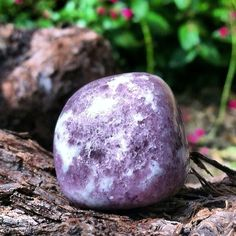 "Lepidolite: this stone is the master mood stabilizer; moving one through upsetting challenges and emotional trauma, this stone imparts deep calm, tranquil relaxation, and a Zen-like serenity; excellent for easing insomnia, aiding one through the death of the ego, and encouraging detachment from negative or destructive thoughts, this ""stone of transition"" delivers one to the more loving and Higher Self. #perspicacityparty #magicgeodes #magicstones #stones #crystals #gems #lepidolite…"
