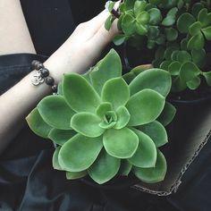 aesthetic, dark, green, grunge, plants