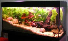 red oscar fish | Growing Live Aquarium Plants: How to Choose Aquatic Vegetation to …