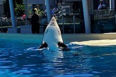 Kasatka pic Jeffrey Venture Twitter 7/17 Rotting away After making them a lifetime of cash and babies