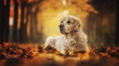 colorful golden by Danny Block - Photo 126444427 - 500px