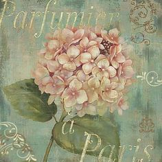 Shop for Daphne Brissonnet 'Vintage Fragrance IV' Canvas Art. Get free delivery On EVERYTHING* Overstock - Your Online Art Gallery Store! Decoupage Vintage, Papel Vintage, Vintage Diy, Vintage Labels, Vintage Ephemera, Vintage Cards, Vintage Paper, Vintage Prints, Posters Vintage