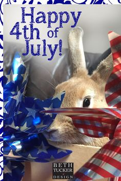 fourth of july | happy 4th | holidays | bunny