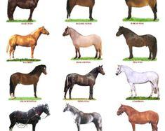A4 Laminado de Posters. Razas de ganado vacuno, ovejas o cerdos por PaulChapmanFineArt