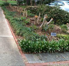 Are you cruel enough to be a gardener? via The Elizabeth Lawrence House & Garden