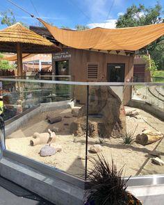 Meerkat Manor is open! 🎆🎇💥Come see our fuzzy friends the meerkats as they explore their brand new habitat! Tarantula Habitat, Dubai Safari, Zoo Architecture, Indoor Pond, Zoo Project, Planet Coaster, Future Farms, Animal Habitats, Zoos