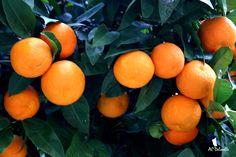 Soleil Orange (Murcia, Espagne)