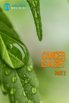 Part Two of our courageous story of an Australian woman diagnosed with advanced liver cancer, given a death sentence by modern medicine, and saved by medicinal cannabis oil.   Cancer Is A Gift Part Two - A Husband's Perspective on Medicinal Cannabis Oil   Global Freedom Movement   THC   CBD   Cannabidiol   Cannabinoids   Tetrahydrocannabinol   Advanced Hepatocellular Carcinoma   Sorafenib   Nexavar   Chemotherapy